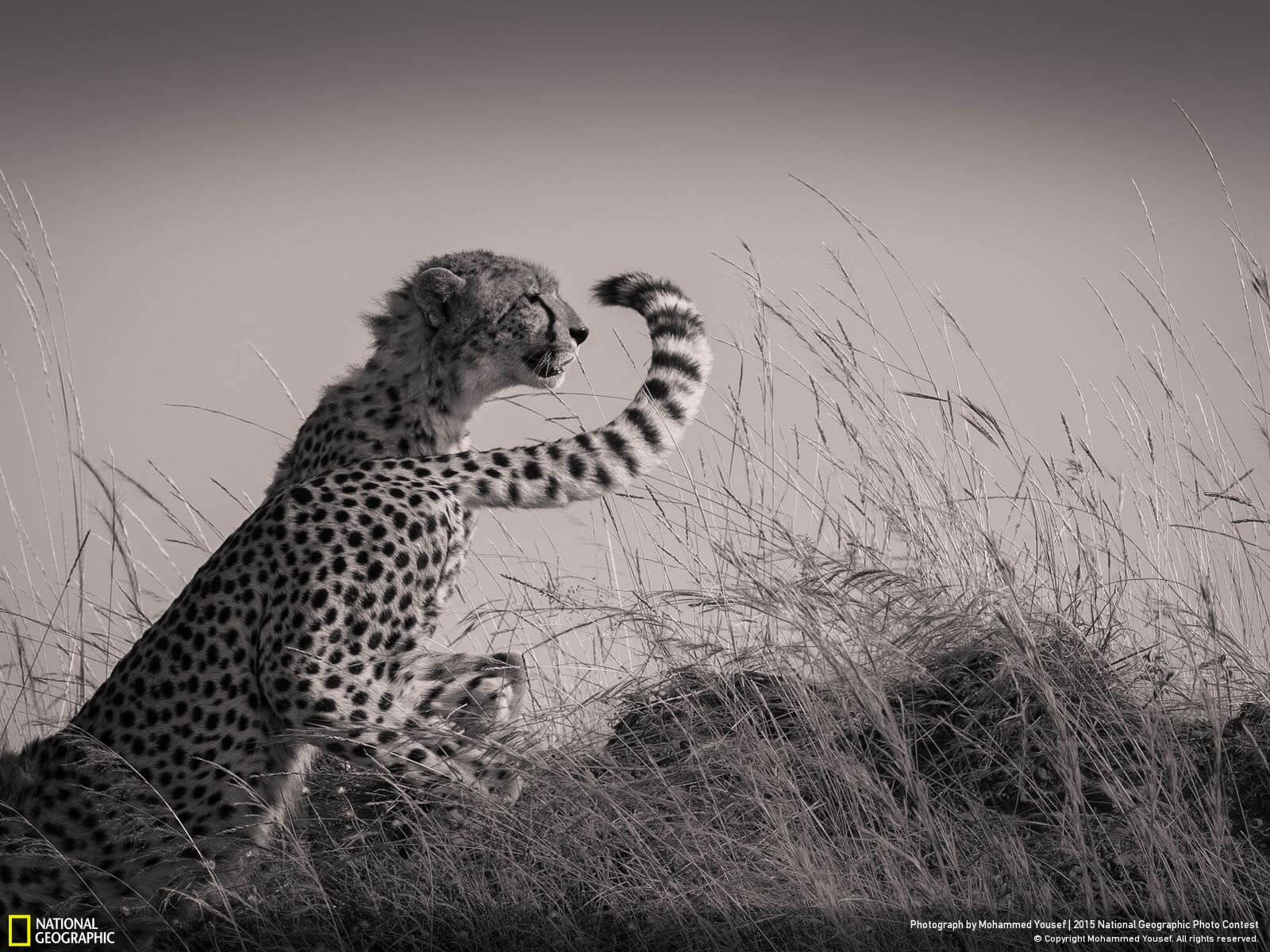 """Changing Shifts"" 