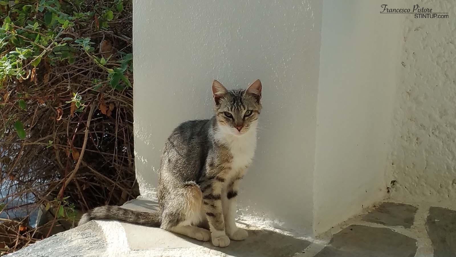 Uno dei tanti gatti in attesa di cibo fuori dalla porta della stanza