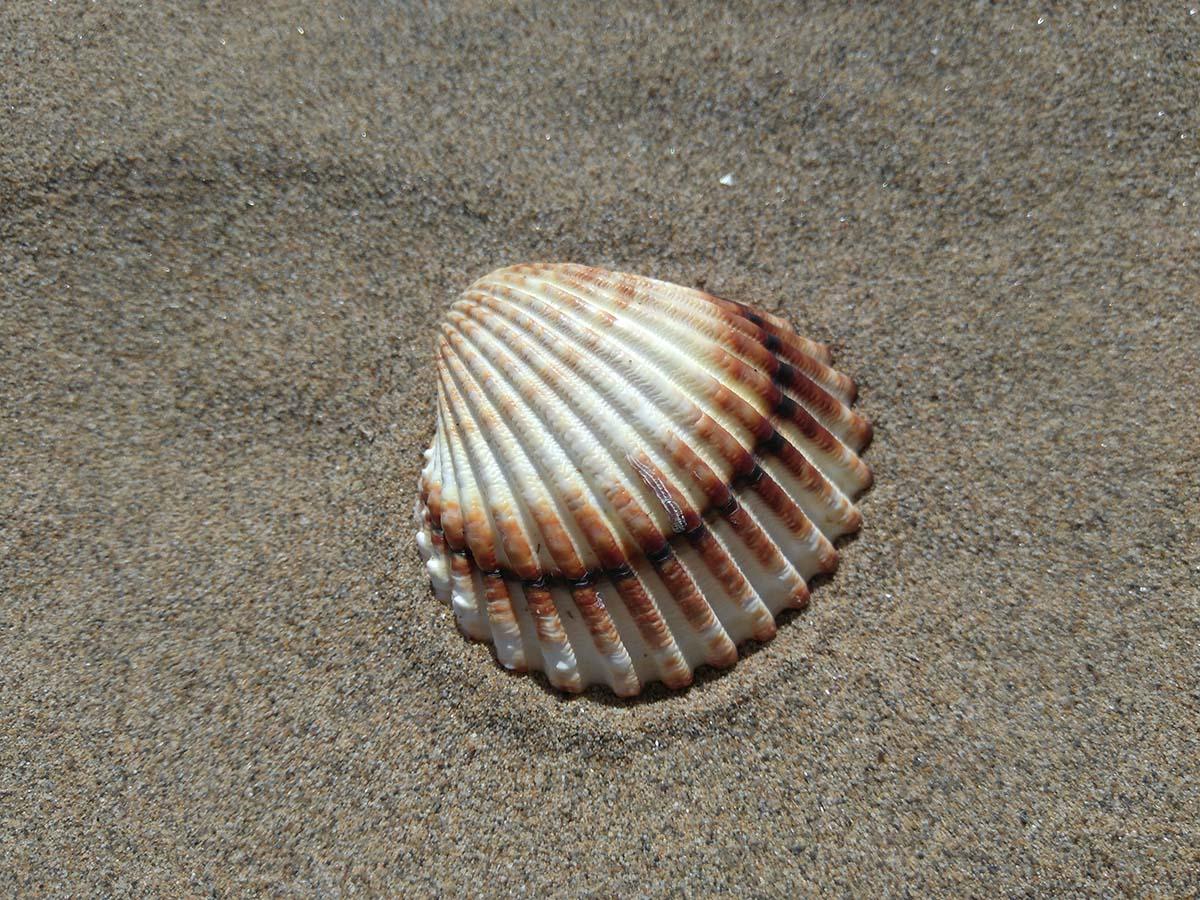 Macro di conchiglia, da notare il micromosso della sabbia