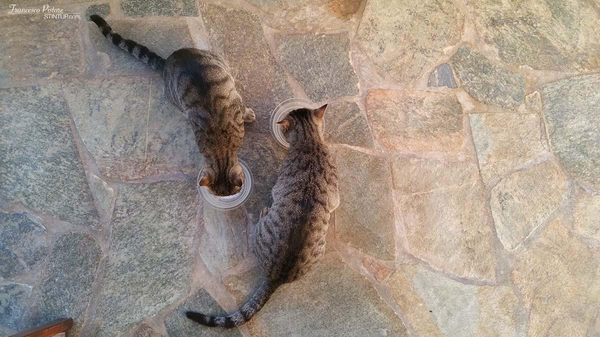 Colazione con i gattini della signora Chaido