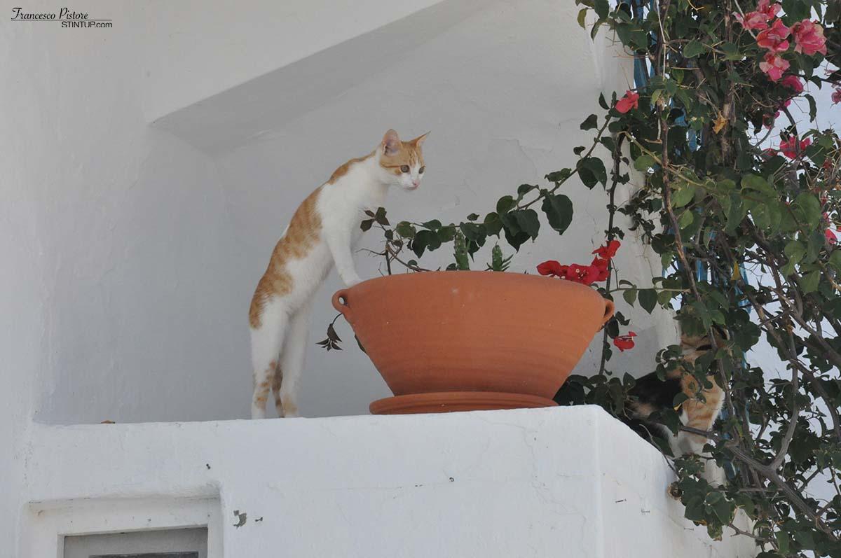 Milos. Plaka è il regno dei gatti