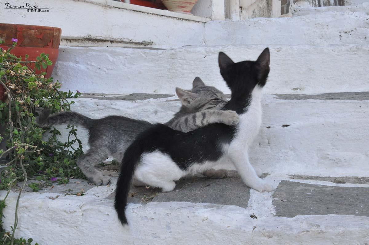 ...e dei gattini (1)