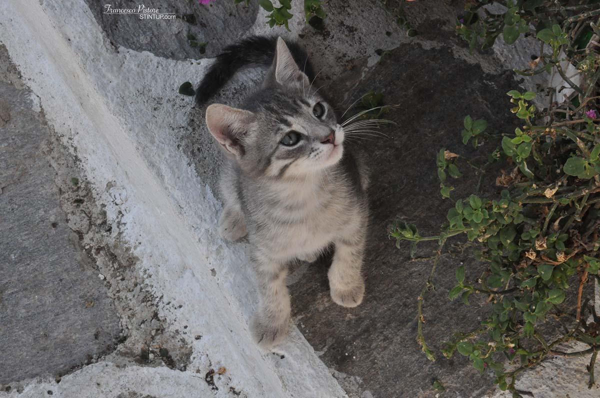 ...e dei gattini (2)