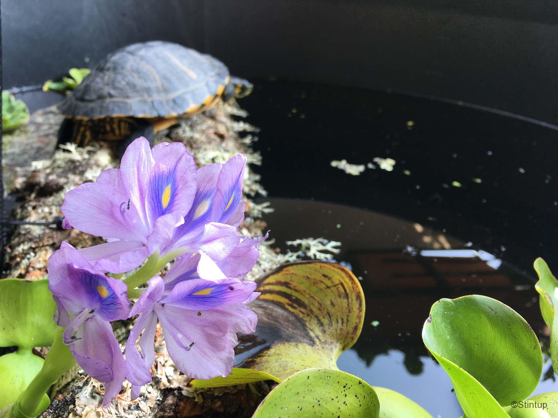 Come Costruire Un Bonsai Pond In Terrazza Anche Per Pesci E Tartarughe