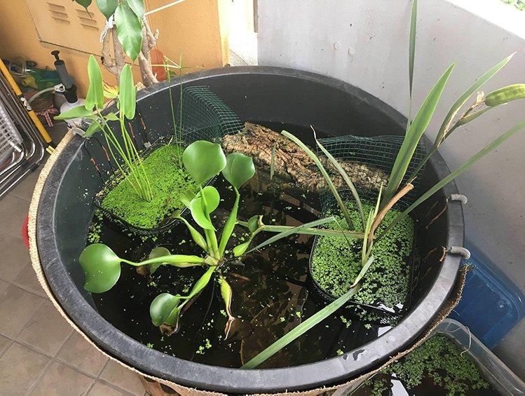 bonsai pond